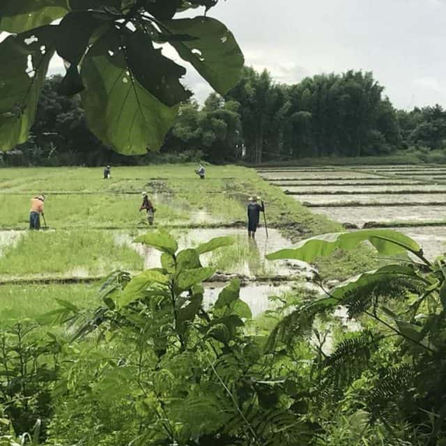 rice field activity | Buzzy Bee Bike, Chiang Mai, Thailand