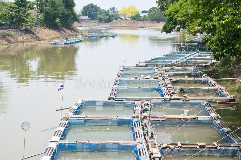 fish farms in Ping River | Buzzy Bee Bike, Chiang Mai, Thailand