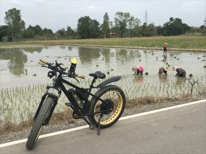 witness rice planting by E-bike | Buzzy Bee Bike, Chiang Mai, Thailand