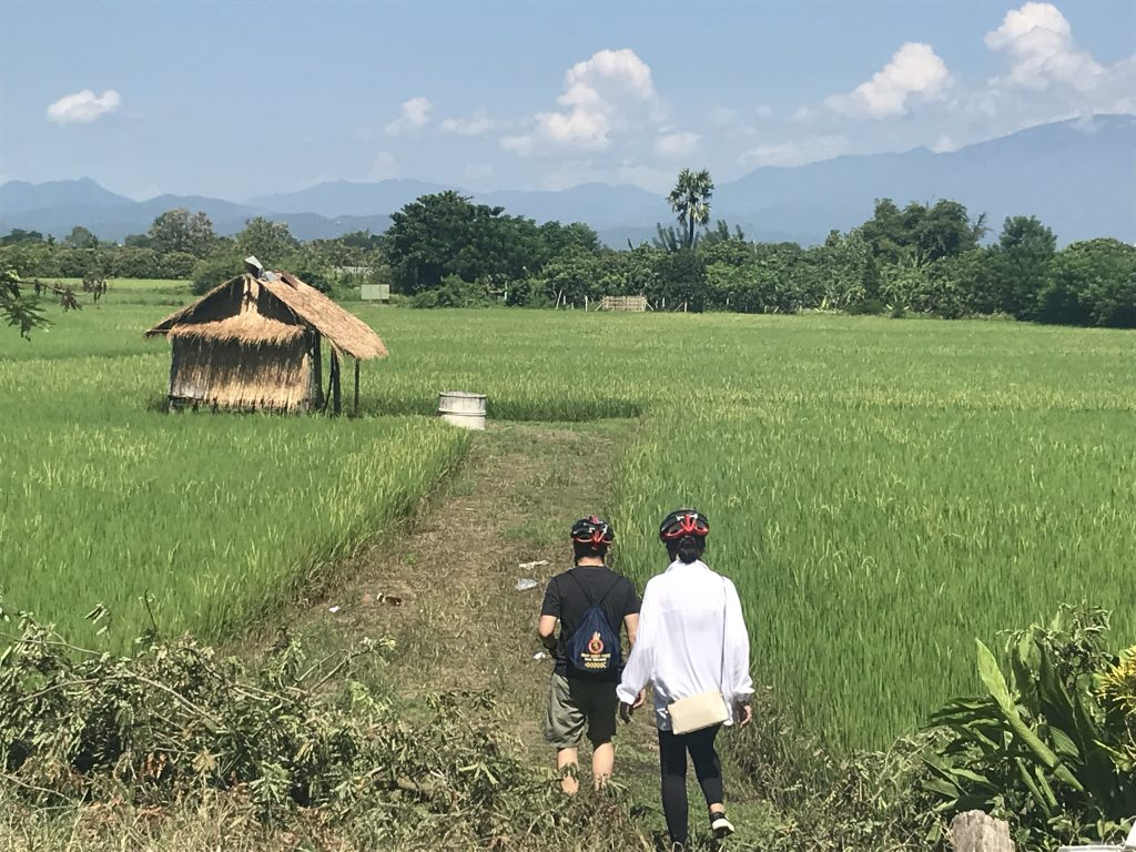 stop at rice field | Buzzy Bee Bike, Chiang Mai, Thailand