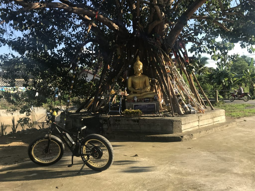 stop at a bodhi tree | Buzzy Bee Bike, Chiang Mai, Thailand