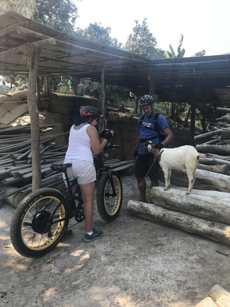 animals on our adventures: goat | Buzzy Bee Bike, Chiang Mai, Thailand