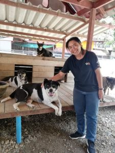WVS Care for Dogs | Buzzy Bee Bike, Chiang Mai, Thailand